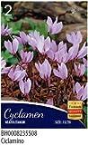 Blumenzwiebeln verschiedenen Arten und Farben in Umschlag, ciclamini