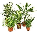 Zimmerpflanzen Grünpflanzen Mix nach Ihren Wünschen (5er Mix)