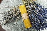 BeeIT 5x Pure Bienenwachs, handgerollt Honeycomb Kerzen Box mit natürlichem Bienenwachs Stumpenkerzen