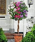 Pinkdose Neue Ankunft 100 Partikel/Bag Riesen Hibiskus Seltene Outdoor Bonsai Baum Diy Hausgarten Topf Oder Garten Blumen Pflanzen: 2