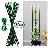 Jane Choi 50 Stück Pflanzenstütze Tomatenstangen Rankgitter Grün Pflanzstab Rankstab 60 cm aus Bambus ca. Ø 5 mm