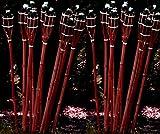 STAR-LINE 12 Bambusfackeln Gartenfackel 90cm Mahagoni-Farben mit Docht & Tank Bambusfackel Gartendekoration Fackel Gartenfackeln Hochzeit Dekoration Öllampen
