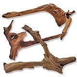 Mangrovenwurzel für Terrarium Aquarium Garten Deko Wurzel Echtholz Treibholz Reptil Mangrove M-XL Holz verschiedene Größen und Modelle erhältlich *alles Einzelstücke* (M (40-80 cm), Modell 4)