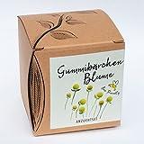 Geschenk-Anzuchtset Gummibärchenblume