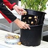 TOM-GARTEN PotatoPot inklusive 3x Küchenkräuter-Saatgut | einfaches pflanzen von Kartoffeln auf dem Balkon oder der Terasse | inklusive passendem Kräuter-Saatgut