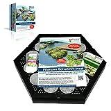 bell vital Isla Planta Pflanzinsel (1er Set) für einen sauberen Teich, rein biologisch, modular erweiterbar, 38cm