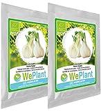 BIO Fenchel Pflanzen-Samen Set - indoor/outdoor