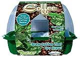 Dunecraft 22857Grow Your Own Kaffeepflanze