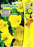 Nachtkerze, gelb, großblumig, lange Blütezeit, einfache Kultur, Staude ( mit Stecketikett) 'Oenothera missouriensis '