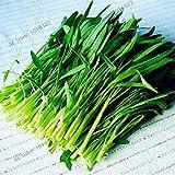 100pcs / bag Wasser-Spinat kangkong Gemüsesamen, Erbstück organischen Sumpf Kohl leicht anzubauen