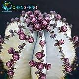 Billig! Japanische Rare Sukkulente Samen Über 50pcs Kakteensamen Seltene Blumen Sementes Bonsai Samen Indoor Pflanzen Blumen Topf Samen der Veränderung