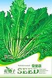 Heiße verkaufen50pcs Potherb Senfkörner, einjähriges Kraut Pflanze, Grün, Gemüse, Samen, Gartenbonsai sät freies Verschiffen