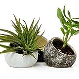 Chive-Koski, Luftpflanzenbehälter, handgefertigter kleiner, ovaler Keramiktopf, Tillandsien, Bromelie, Sukkulent und Kaktus-Behälter, 3er-Set, je 1Stück in Weiß, Schokoladenbraun, Schwarz