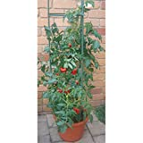 Unbekannt VARILANDO Tomaten-Rankkäfig Rankhilfe Wachstumshilfe Tomaten-Stab Wuchs-Hilfe Rank-Stab Anzucht Aussaat
