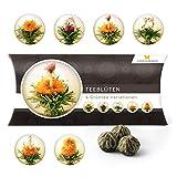 6 Teeblumen Geschenk-Box - Grüntee Variationen, Originelle Geschenk-Idee zu Weihnachten, zum Geburtstag oder als kleine Aufmerksamkeit, Teeblüten