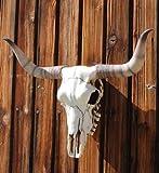 Bullenschädel Bullen Longhorn Schädel Skull Wicca Türbogen Metal LARP