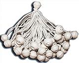 KMH, 50 Zeltgummis/Spanngummis mit Kugel - ideal für Partyzelte (#303025)