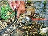 Teichabdeckung in Netzform 3m x 3m Schützen Fische Teichnetz Katzen Blätter Heron