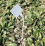50 Stk Plastik Pflanzenschilder Wetterfest Gebogener T-Typ, Stecketiketten Pflanzenstecker Weiß, Etiketten Garten Kunststoff