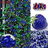 mymotto Obstsamen - 100 Stück Blau Klettererdbeere Samen Mehrjährige Erdbeere Samen Bonsai Pflanzensamen winterhart seltene Obstsamen