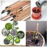 Sprossenstift Bleistift Pflanze Samen Bleistift mit Kräutersamen Naturholz Für Kinder Geschenk (5 Packungs)