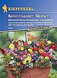 Balkonkasten-Mix 'Pflegeleichte Sonnenkinder'