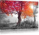 Zauberhafte Waldlandschaft schwarz/weiß Format: 120x80 cm auf Leinwand, XXL riesige Bilder fertig gerahmt mit Keilrahmen, Kunstdruck auf Wandbild mit Rahmen, günstiger als Gemälde oder Ölbild, kein Poster oder Plakat