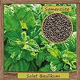 Samenliebe hochwertige Kräuter-Samen - Große Auswahl & viele Sorten - aus natürlichem Anbau - aus Deutschland Östereich Schweiz & Italien, Samensorte :Basilikum Salat