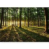 murando - Vlies Fototapete 500x280 cm - Größe Format XXL- Vlies Tapete - Moderne Wanddeko - Design Tapete - Wald Natur Landschaft Bäume c-B-0127-x-b