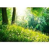 Vlies Fototapete 400x280 cm PREMIUM PLUS Wand Foto Tapete Wand Bild Vliestapete - SUNNY FOREST - Wald Bäume Natur Baum grün Sonnenschein Sonne - no. 030