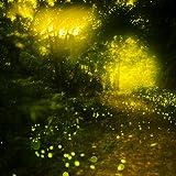 Glühwürmchen Live Wallpapers