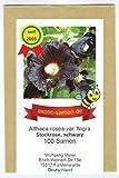 Schwarze Stockrose – Schwarze Malve - Bienenweide - Zier- / Arzneipflanze – Althaea (Alcea) rosea var. Nigra – 100 Samen