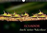 Ecuador durch meine Makrolinse (Wandkalender 2021 DIN A4 quer)