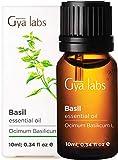 Basilikum-ätherisches Öl - Eine revitalisierende Reinigung für gesünderes Haar und erneuerten Fokus (10 ml) - 100% reines Basilikumöl in therapeutischer Qualität