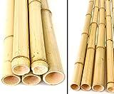 1x Bambusrohr gelb 150cm, Moso Bambus Gebleicht, Durch. 4,8-6cm - Bambus ist eine Natur Superfaser mit besonderen Eigenschaften