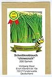 Schnittknoblauch, chinesisch - Bienenweide - Allium tuberosum (200 Samen)