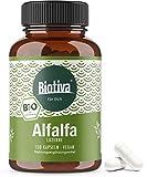 Alfalfa Luzerne Bio - 150 Kapseln - Medicago sativa - vegan - Saat-Luzerne - Schneckenklee - Ewiger Klee - Abgefüllt und kontrolliert in Deutschland