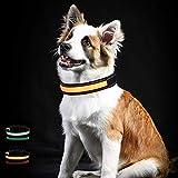 Toozey LED Leuchthalsband für Hunde mit 3 Beleuchtungsmodi, Einstellbare Länge und USB Aufladbar und Wasserdicht Nylon Leuchtendes Hundehalsband, Hohe Sicht und Sicherheit für Ihren Hund, Orange M