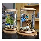 KLSD Kreative LED Desktop Mini Aquarium Desktop-Micro-Zylinder Rotierenden Aquarium Rund 1.5ml Baby Aquarium Geschenk Kind Mann Frau Tochter(Wassergras) (White)