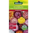 Dehner Blumen-Saatgut, Strohblume 'Gefüllte, riesenblumige Prachtmischung'