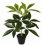 Flair Flower Schefflera Pflanze im Topf Real Touch Kunstpflanzen Zimmerpflanzen künstlich Dekopflanze Grünpflanze Seidenblumen Büropflanze 50cm, Polyester, Kunststoff, Grün, 50 x 28 x 28 cm