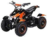 Actionbikes Motors Mini Kinder Elektro Quad ATV Cobra 800 Watt 36 V Pocket Quad - Original Saftey Touch - Kinder E Bike (Schwarz/Orange)
