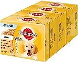 Pedigree Vital Protection Hundenassfutter für Welpen im Beutel – Hundefutter in Gelee mit Huhn, Lamm, Geflügel, Rind & Reis – 48 x 100g Großpackung