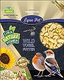 Lyra Pet® 10 kg Erdnusskerne 10000 g Splits Weiss blanchiert Haut Erdnüsse Vogel Winterfutter