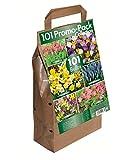 Greenbrokers Ltd Blumenzwiebel-Set, 6 verschiedene Frühlingsblumen-Sorten, Packung mit 101 Zwiebeln