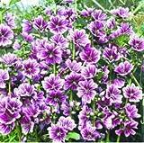 Acecoree Samen Haus- 50pcs Stauden-Malve'Zebrina' winterhart, Riesige Hibiskusblumensamen, Malvenpflanze Garten Zierblumen