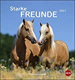 Pferde - Starke Freunde Postkartenkalender 2021 - Kalender mit perforierten Postkarten - zum Aufstellen und Aufhängen - mit Monatskalendarium - Format 16 x 17 cm