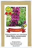 Wilde Malve - Dunkelviolett - Bienenweide - Malva sylvestris var. mauritiana - Zier-/Arzneipflanze - 250 Samen