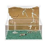 AntHouse - Natürliche Ameisenfarm aus Sand - Modell L (Sandwich + Futterbox) (Gratis Ameisen)