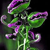 Keland Garten - 50 Stück Selten Venusfliegenfalle Samen Mischung bonsai blau/rosa/grün usw, Dionaea muscipula, fleischfressende Pflanze